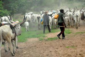 The Way To Avert Worse Farmers/Herders' Clashes Next Year Is Provision Of Ranches - Agric Minister, Audu Ogbe