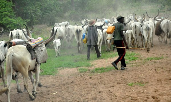 Our Encounter With Fulani Herdsmen, By Emmanuel Yawe